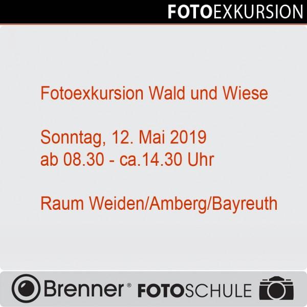 Fotoexkursion Wald und Wiese